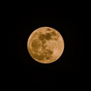 moon-pure-adam-allegro