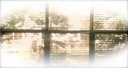 daylight outside my window 2