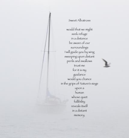albatross and sailboat